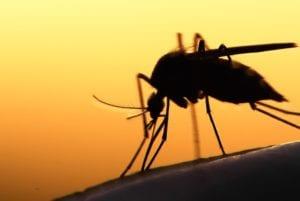 zika virus - o que é e como se prevenir