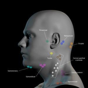 Modelo 3D dos glânglios linfáticos