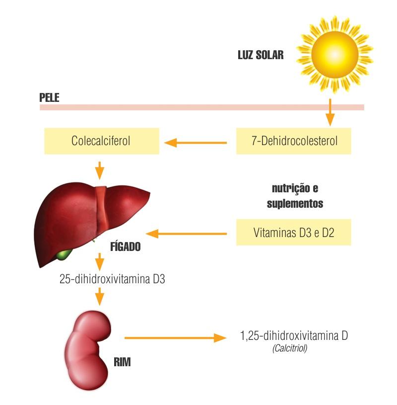 Síntese e Metabolismo da Vitamina D
