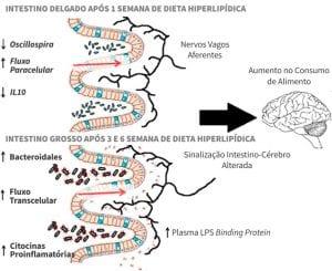 imagem artigo microbiota obesidade infantil