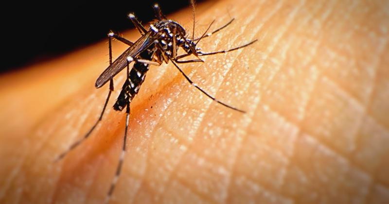 mosquito culex zika virus