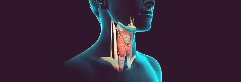 tireoide hormonio desregulador endocrino