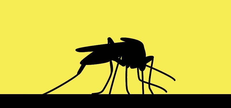 febre amarela mosquito