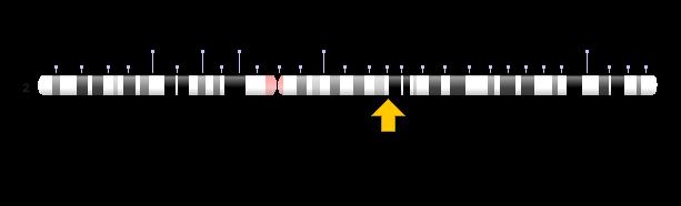 localizacao cromossomica do gene da lactase